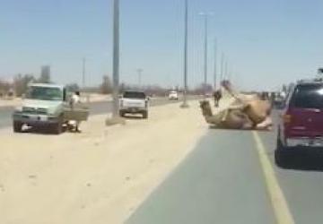 Ces images d'une route à Dubaï pourraient choquer certaines personnes...
