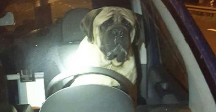 Une photo d'un chien au volant d'une voiture enflamme les réseaux sociaux