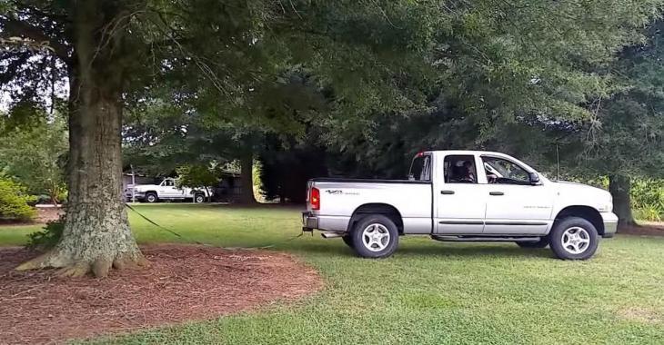Il tente de déraciner un arbre avec sa camionnette, mais ne quittez pas le tronc des yeux!