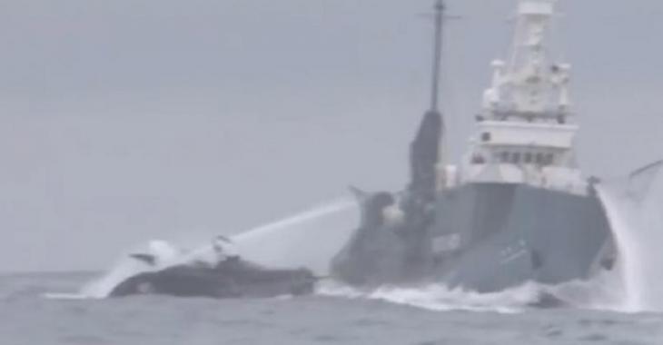 Un accident de bateaux surprenant, c'est la guerre pour la protection des baleines!