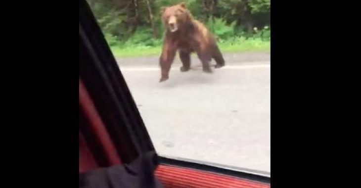 Le conducteur de cette voiture a eu la peur de sa vie en Alaska; il a fait une rencontre vraiment effrayante!